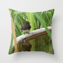 Black Phoebe at the Fountain Throw Pillow