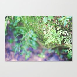 Life in the Undergrowth 02 Canvas Print