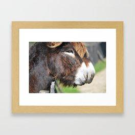 burros Framed Art Print
