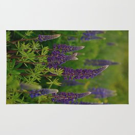 lupine flowers Rug