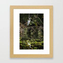 Great White Egret on a Branch Framed Art Print