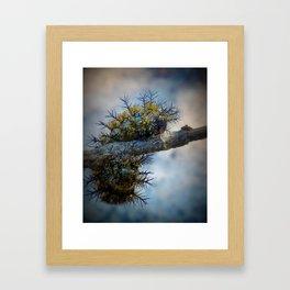 Spikey Framed Art Print