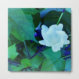 Cotton Blossom Metal Print