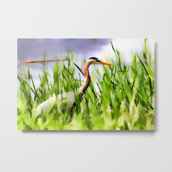 Master of the Marshes  -  Blue Heron Metal Print