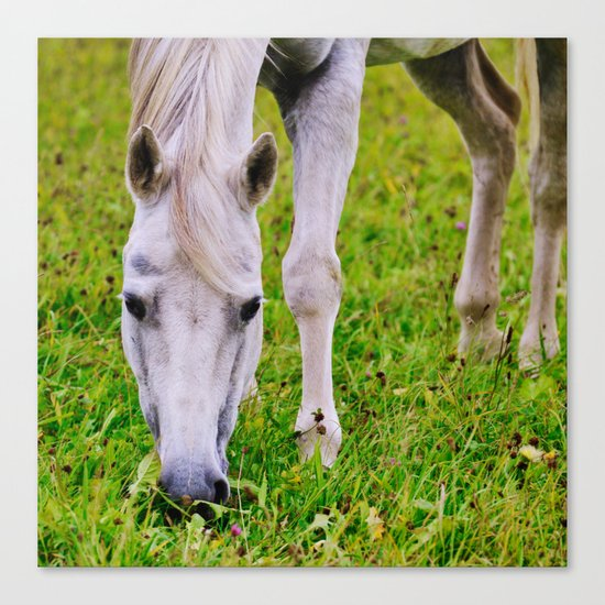 White horse on green meadow Canvas Print