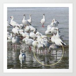Les Oies Blanches : Kécéça ? - The White Geese : What's this? Art Print