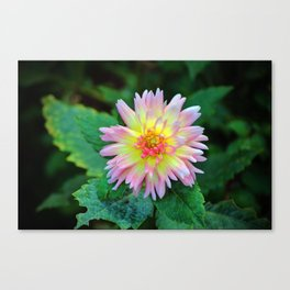 Dahlia With Green Leaves Canvas Print