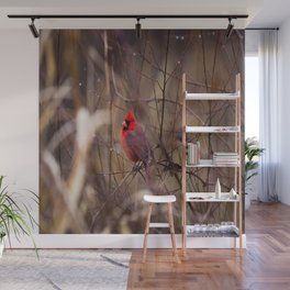 Cardinal - Bright Red Male Bird Rests in Raindrops Wall Mural