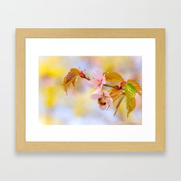 Honey bee on a sakura flower Framed Art Print
