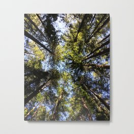 Redwood Canopy Metal Print
