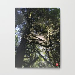 Light through branch Metal Print