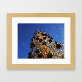 Rising Silversword Framed Art Print