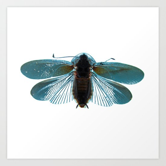 Blue Moth Art Print