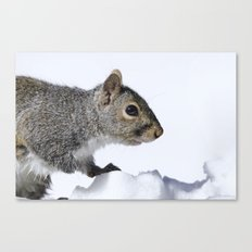 Snow Squirrel Canvas Print