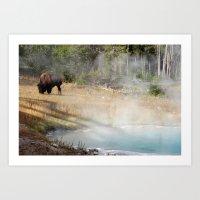 Buffalo at Thermal Pool Art Print