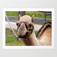 camel Art Prints featuring camel by Dantastic Photos