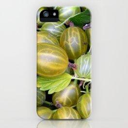 Berry gooseberries, harvesting agrus iPhone Case