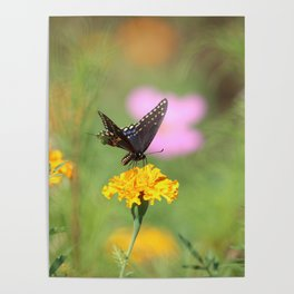 Swallow Tail Dream Poster
