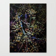 Seedheads Canvas Print