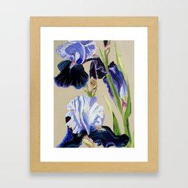 Blue Bearded Iris Framed Art Print