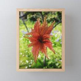 NEW SPRING LEAVES ON ACER TREE Framed Mini Art Print