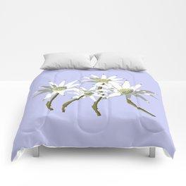 Flannel Flowers Actinotus helianthi Comforters