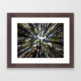 Giant Redwoods Framed Art Print
