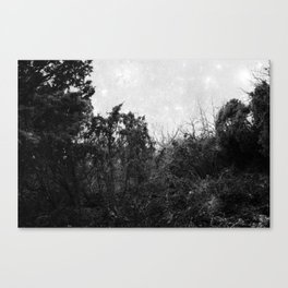 Forest poetry Canvas Print