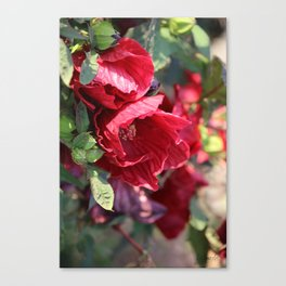 Ruby Red Hibiscus Canvas Print