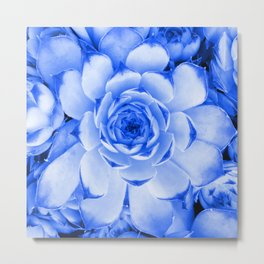 Blue Succulent Tinted Photo Metal Print