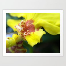 Yellow and Brown Orchid Art Print