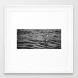 Pelican in B&W Framed Art Print