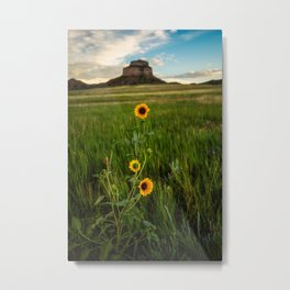 Sunflowers on the Western Prairie - Flowers and Landscape Near Scottsbluff Nebraska Metal Print