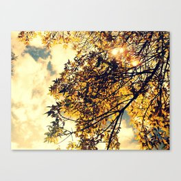 My Fair Ivory  Canvas Print