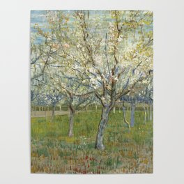 Orchard with Blooming Apricot Trees Poster