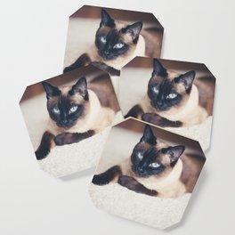 Siamese Cat Coaster