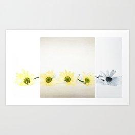 Little Daisies in a Row Art Print