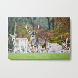 FALLOW DEER WITH SOMETHING TO SAY Metal Print
