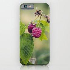 The juicy berries of raspberry on the green bush Slim Case iPhone 6s