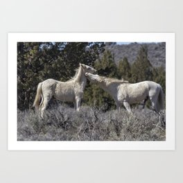 Wild Horses with Playful Spirits No 7 Art Print