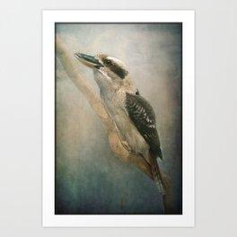 Kookaburra sits in the old gum tree......! Art Print