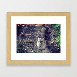 Pheasant on the farm Framed Art Print