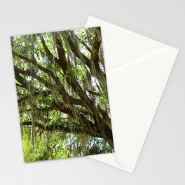 Live Oak in Springtime Stationery Cards