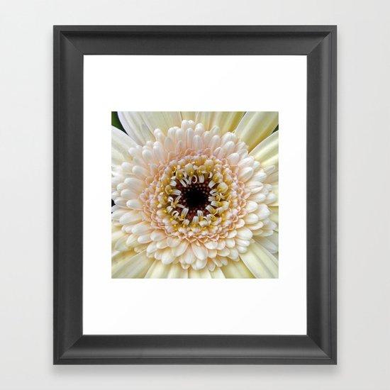 gerbera bloom IV Framed Art Print