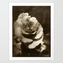 Rosas Moradas 1 Antiqued Art Print