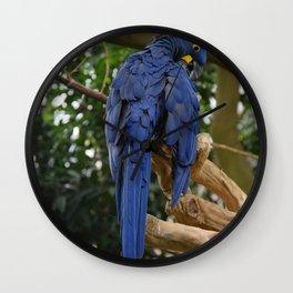 National Aviary - Pittsburgh - Hyacinth Macaw Wall Clock