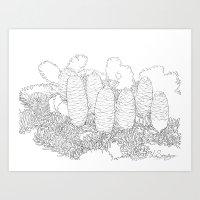 North American fir freehand Art Print