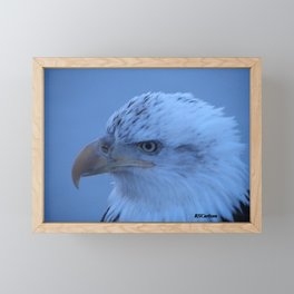 Young Eagle in Failing Light Framed Mini Art Print