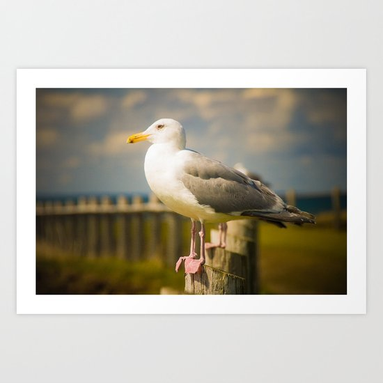 Seagull on a Fence Art Print