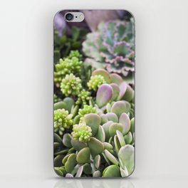 Blushing Succulents iPhone Skin
